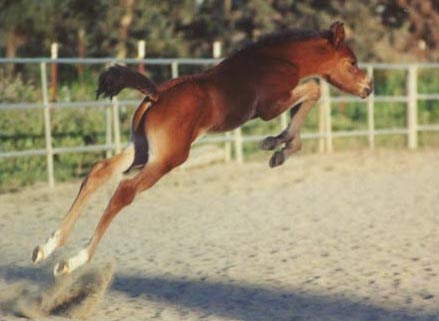 Real Flying Horse